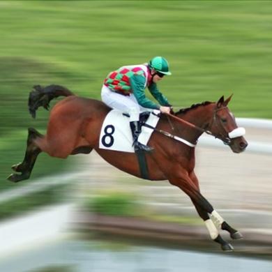 responsive website horse race